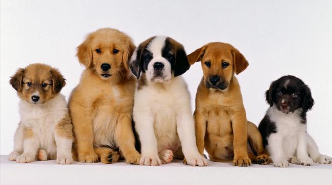 fotos-de-cachorros4